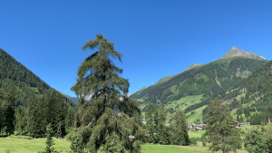 Sommer im Defereggental