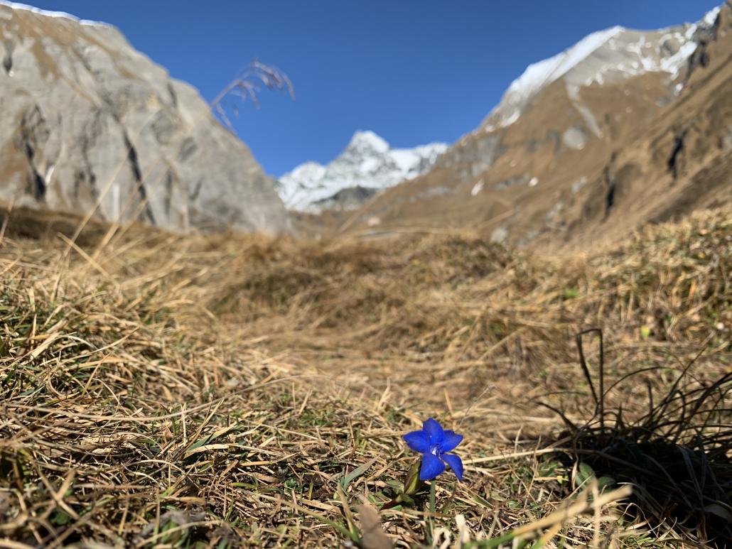Sommer in Osttirol - Oberweissen Hittl